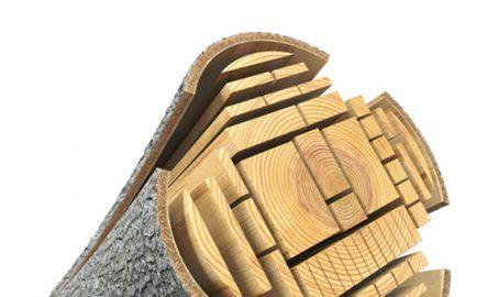 Você sabe o que é a madeira?