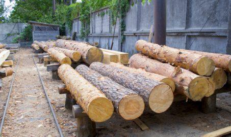 Quais os tipos de madeiras?
